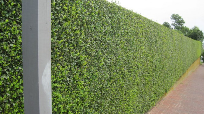 hedge_trimming