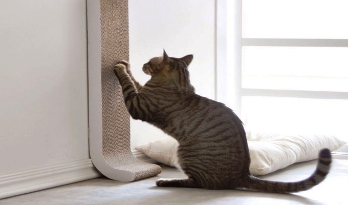 What Your Cat Needs Inside Its Cat Enclosure